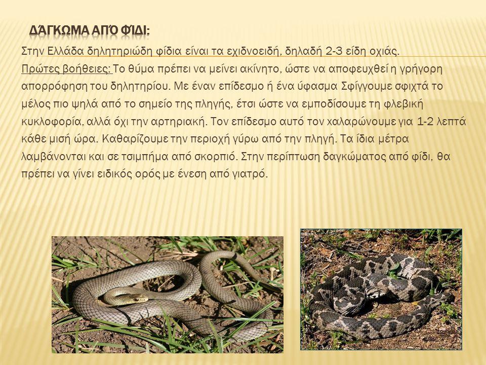Δάγκωμα από φίδι: