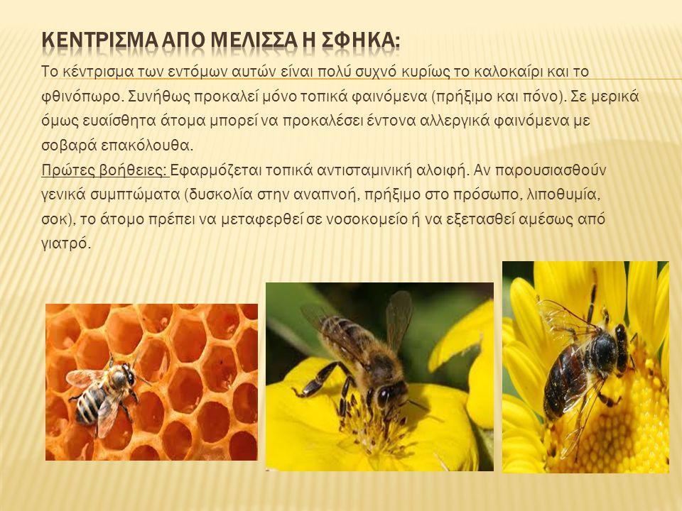 keντρισμα απo μeλισσα h σφhκα: