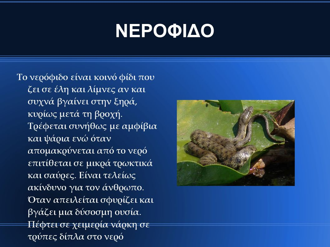 ΝΕΡΟΦΙΔΟ