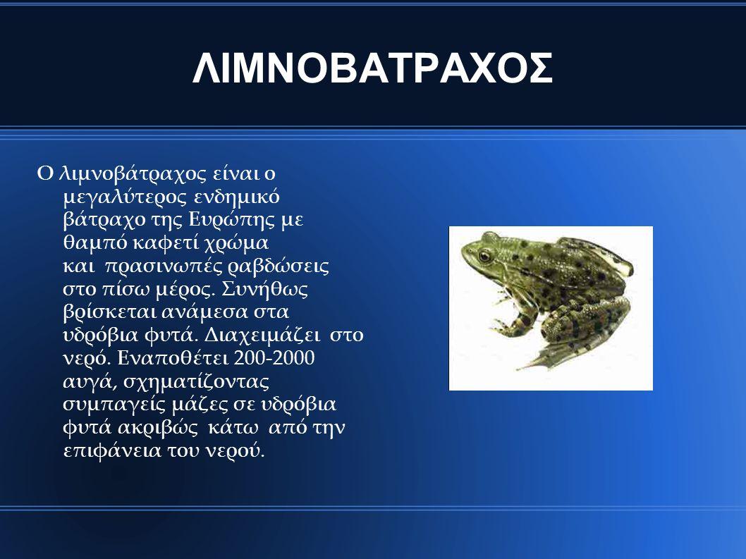 ΛΙΜΝΟΒΑΤΡΑΧΟΣ