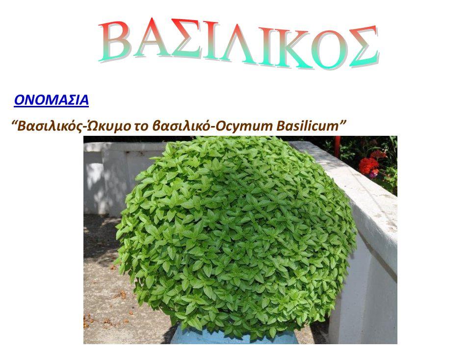 ΒΑΣΙΛΙΚΟΣ ΟΝΟΜΑΣΙΑ Βασιλικός-Ώκυμο το βασιλικό-Ocymum Basilicum