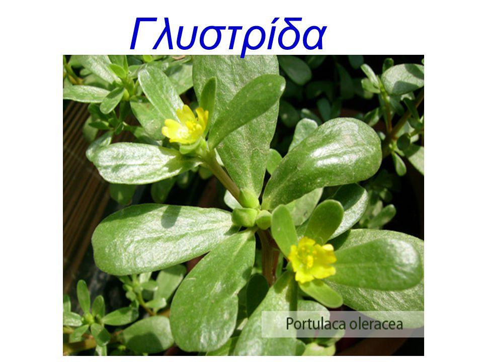 Γλυστρίδα