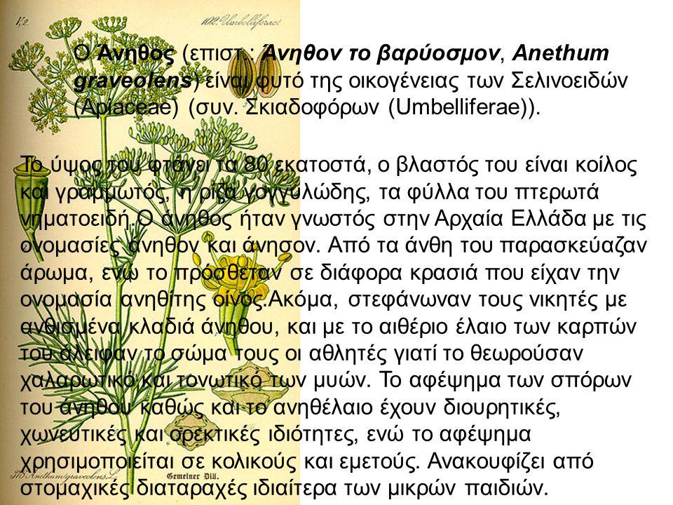 Ο Άνηθος (επιστ.: Άνηθον το βαρύοσμον, Anethum graveolens) είναι φυτό της οικογένειας των Σελινοειδών (Apiaceae) (συν. Σκιαδοφόρων (Umbelliferae)).