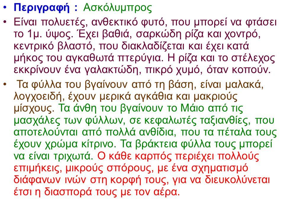 Περιγραφή : Ασκόλυμπρος
