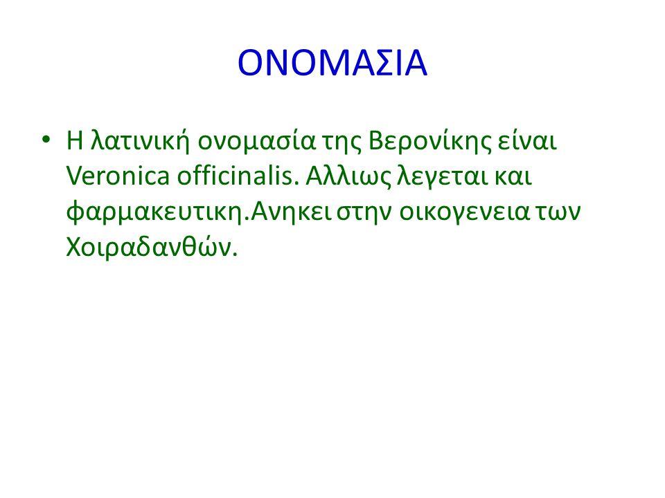 ΟΝΟΜΑΣΙΑ Η λατινική ονομασία της Βερονίκης είναι Veronica officinalis.