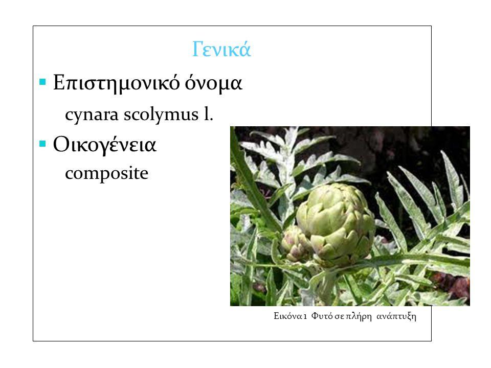 Επιστημονικό όνομα cynara scolymus l. Οικογένεια Γενικά composite