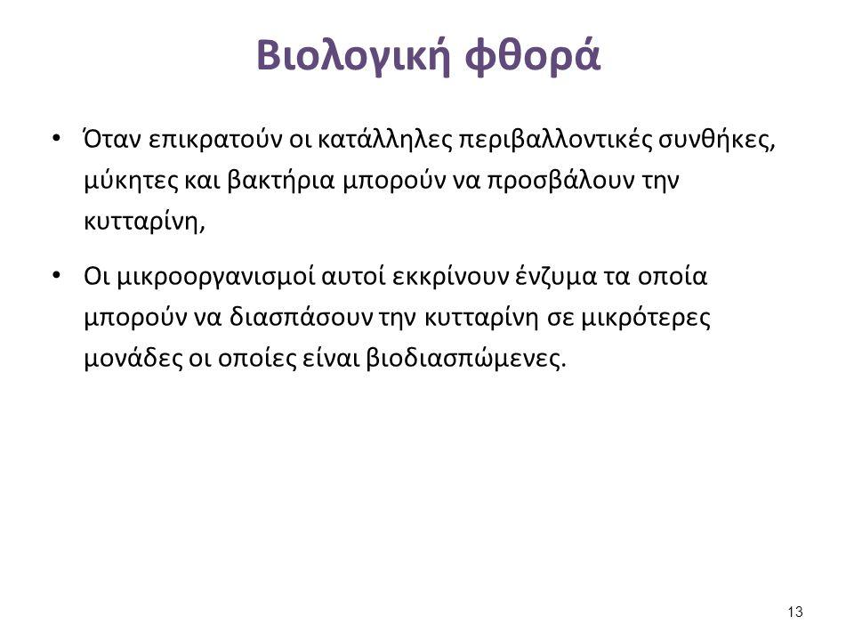 Πρωτεϊνικές (ζωικές) ίνες