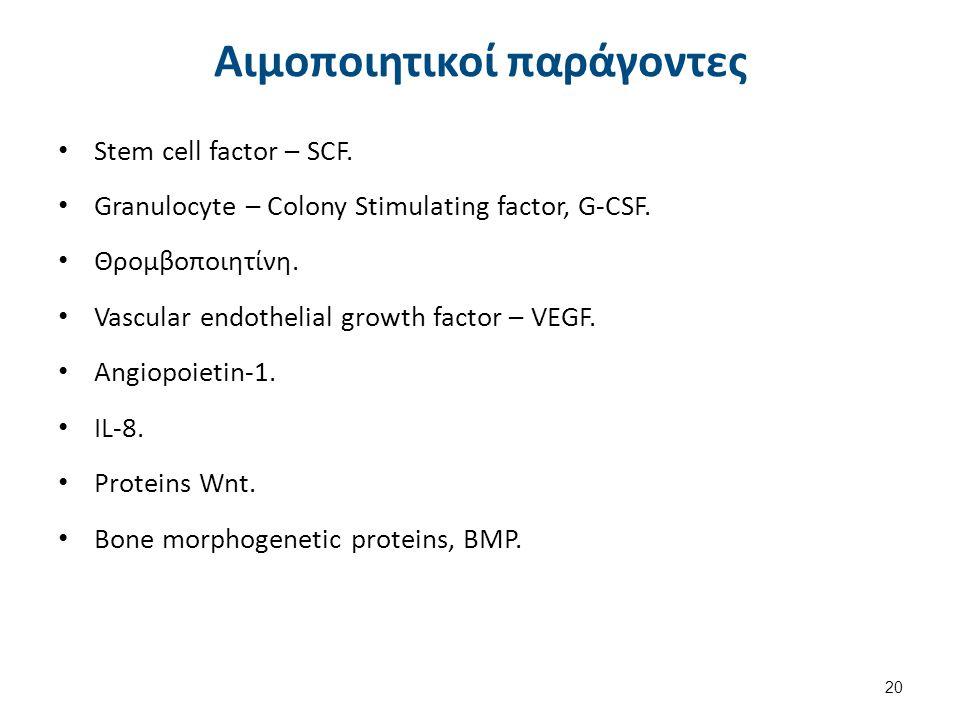Κύτταρα του στρώματος Οστεοβλάστες. Οστεοκλάστες.