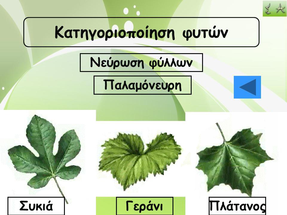 Κατηγοριοποίηση φυτών