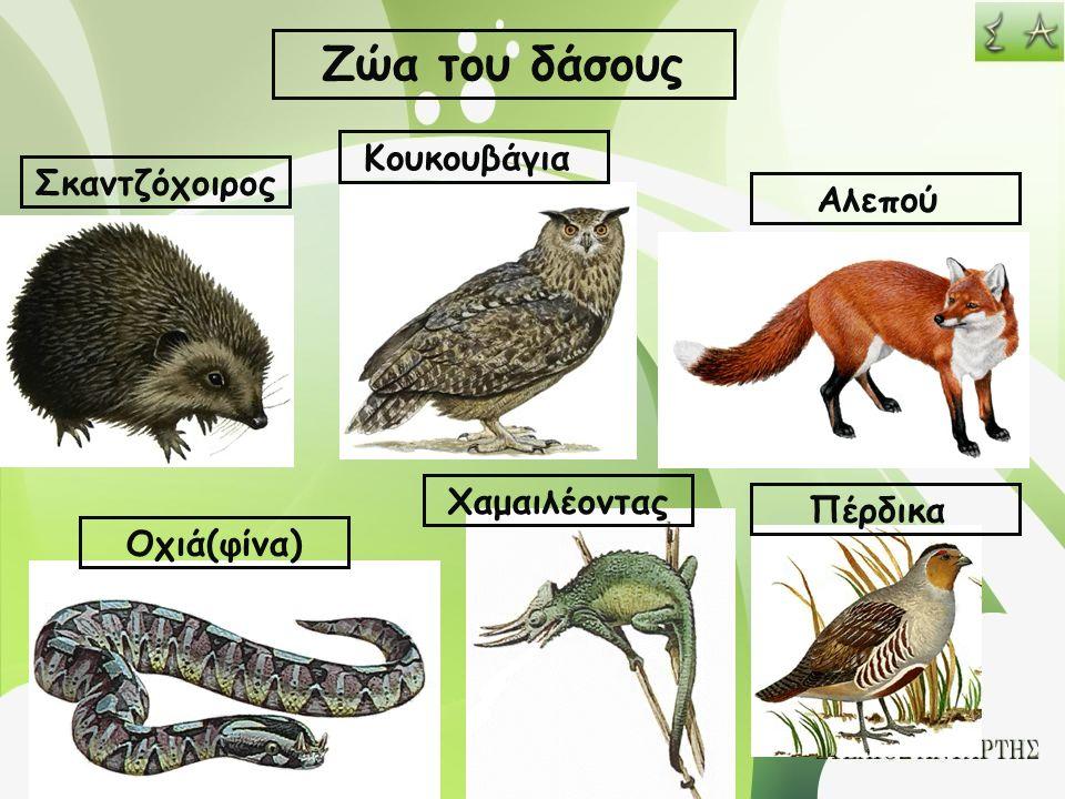 Ζώα του δάσους Κουκουβάγια Σκαντζόχοιρος Αλεπού Χαμαιλέοντας Πέρδικα