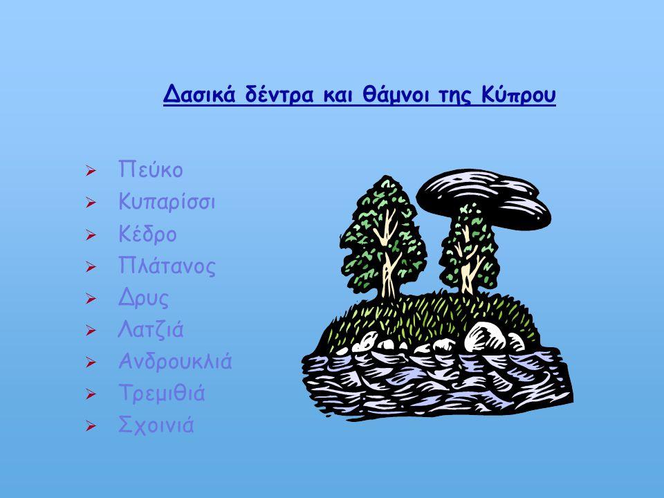 Δασικά δέντρα και θάμνοι της Κύπρου