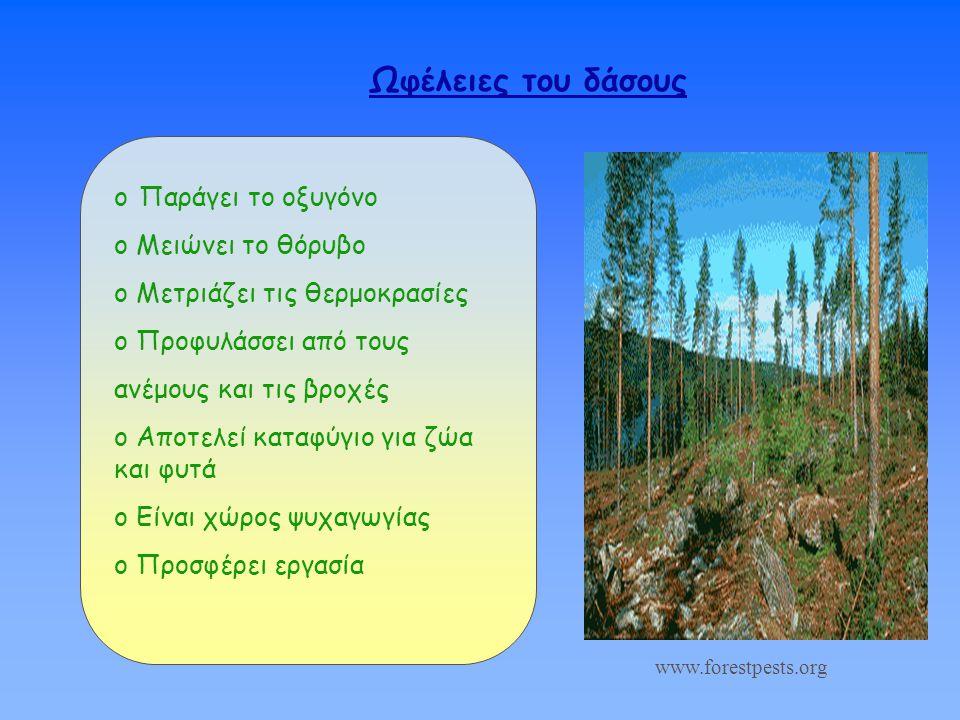 Ωφέλειες του δάσους Παράγει το οξυγόνο Μειώνει το θόρυβο