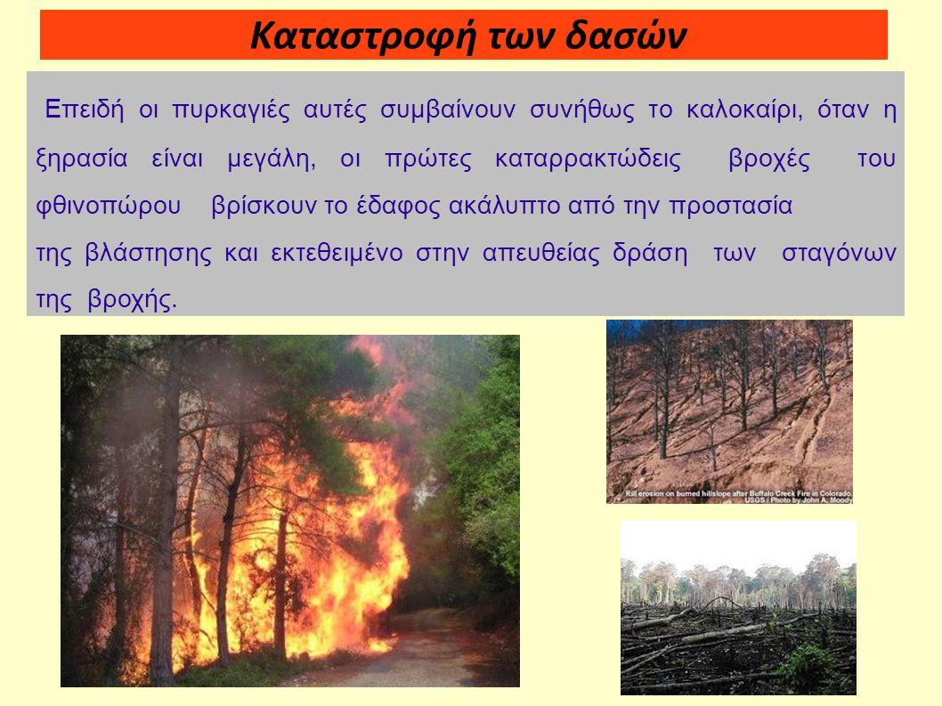 Καταστροφή των δασών