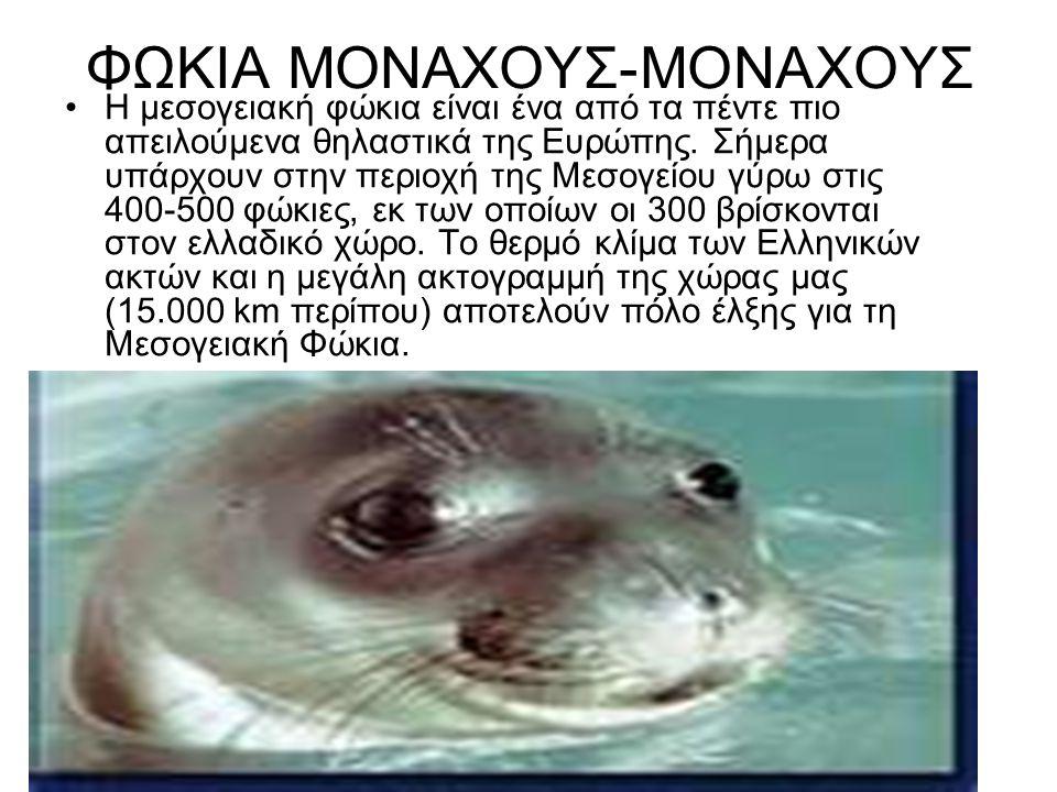 ΦΩΚΙΑ ΜΟΝΑΧΟΥΣ-ΜΟΝΑΧΟΥΣ