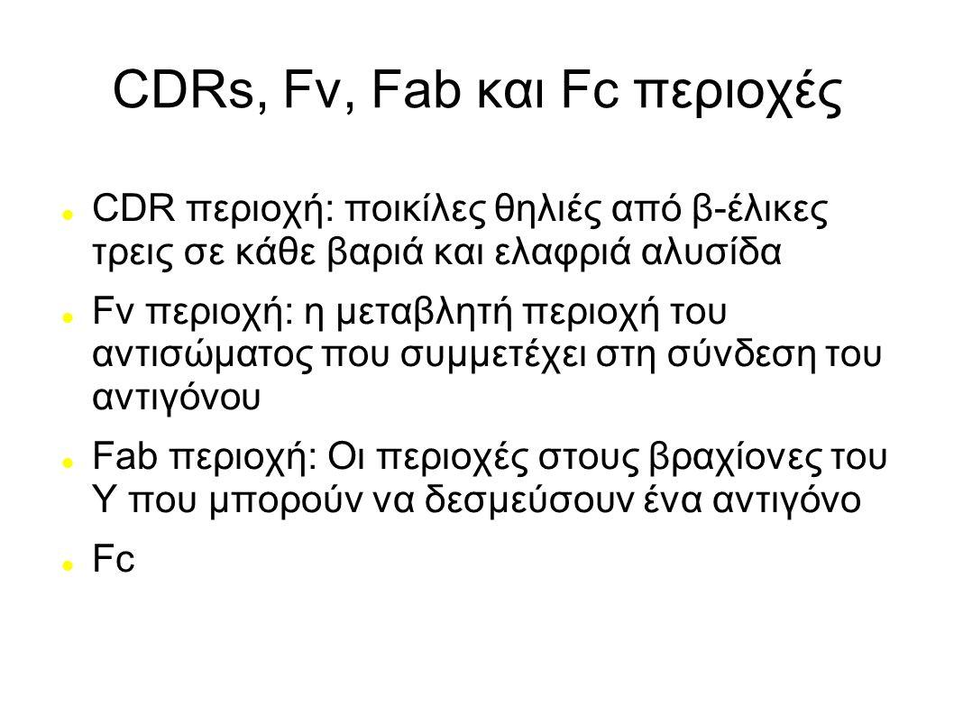 CDRs, Fv, Fab και Fc περιοχές