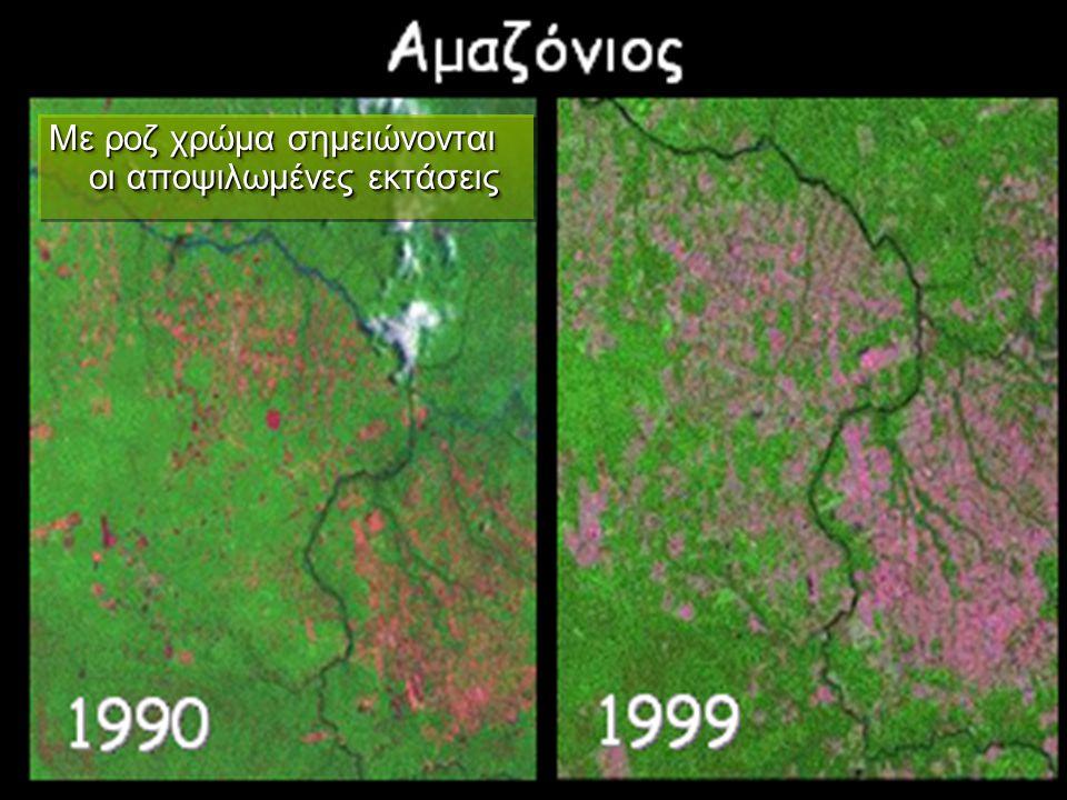 Με ροζ χρώμα σημειώνονται οι αποψιλωμένες εκτάσεις