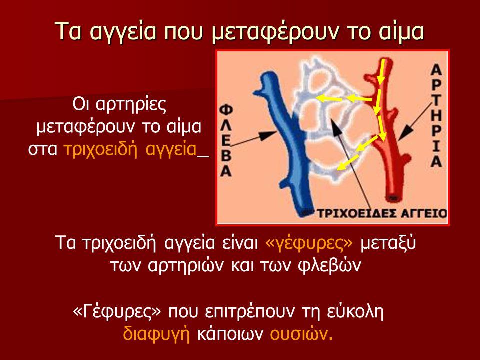 Τα αγγεία που μεταφέρουν το αίμα