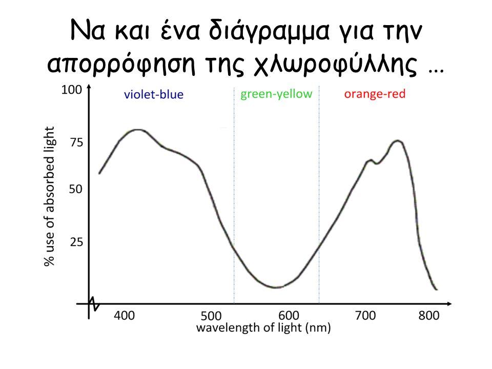 Να και ένα διάγραμμα για την απορρόφηση της χλωροφύλλης …