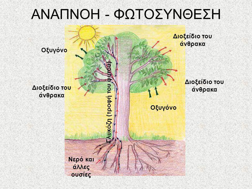 ΑΝΑΠΝΟΗ - ΦΩΤΟΣΥΝΘΕΣΗ Διοξείδιο του άνθρακα Οξυγόνο