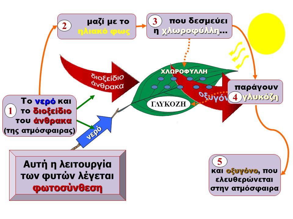 3 2 4 1 Αυτή η λειτουργία 5 των φυτών λέγεται φωτοσύνθεση μαζί με το