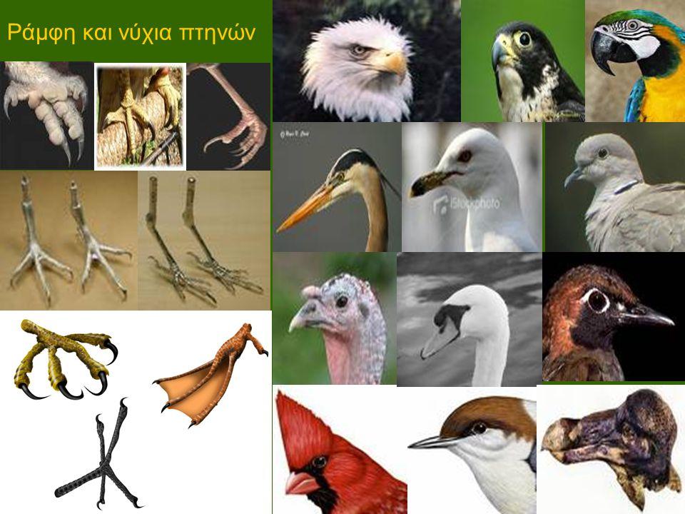 Ράμφη και νύχια πτηνών