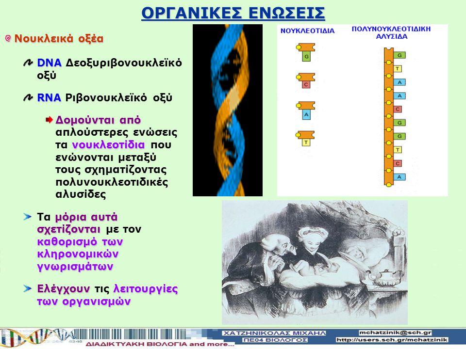 ΟΡΓΑΝΙΚΕΣ ΕΝΩΣΕΙΣ Νουκλεικά οξέα DNA Δεοξυριβονουκλεϊκό οξύ