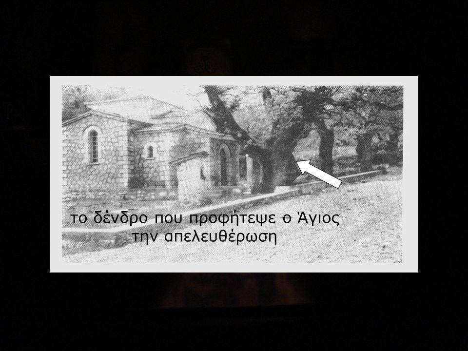 το δένδρο που προφήτεψε ο Άγιος την απελευθέρωση