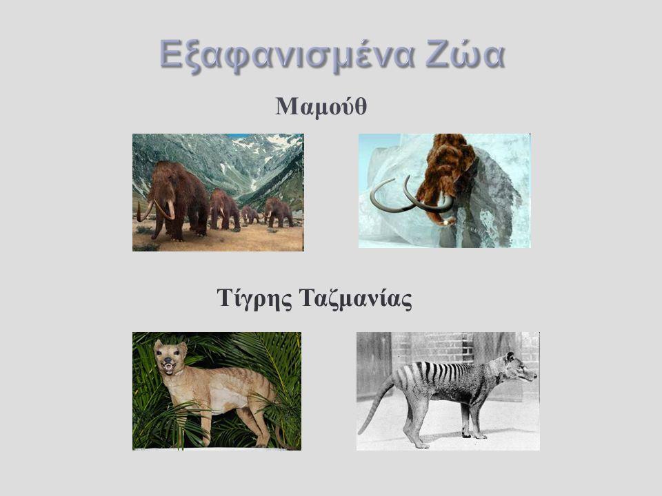 Εξαφανισμένα Ζώα Μαμούθ Τίγρης Ταζμανίας