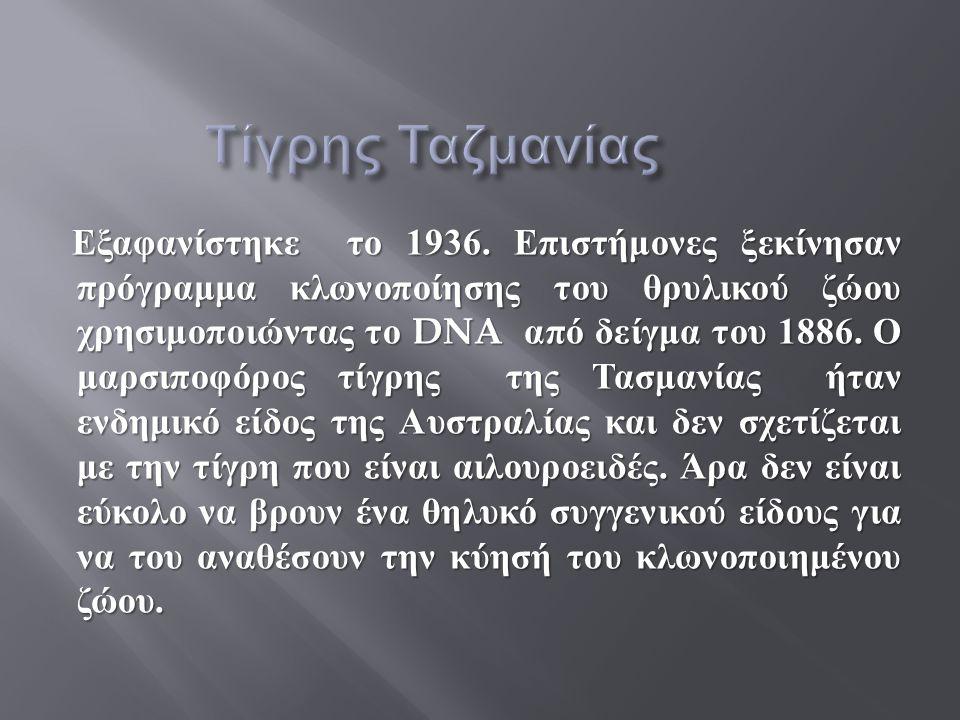 Τίγρης Ταζμανίας