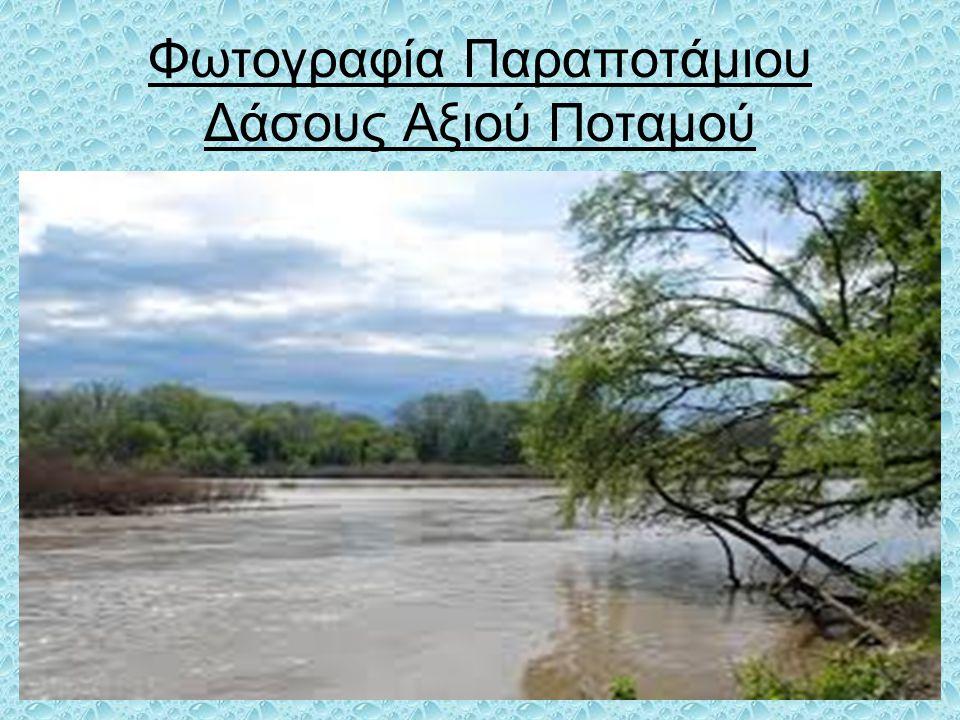 Φωτογραφία Παραποτάμιου Δάσους Αξιού Ποταμού