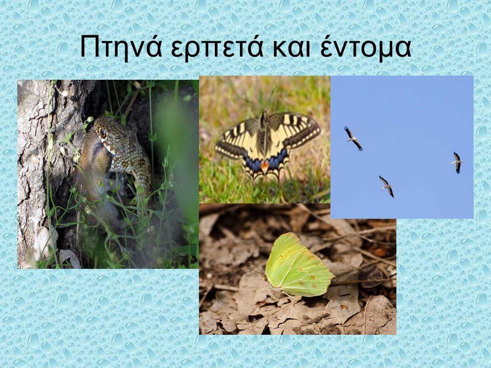 Πτηνά ερπετά και έντομα