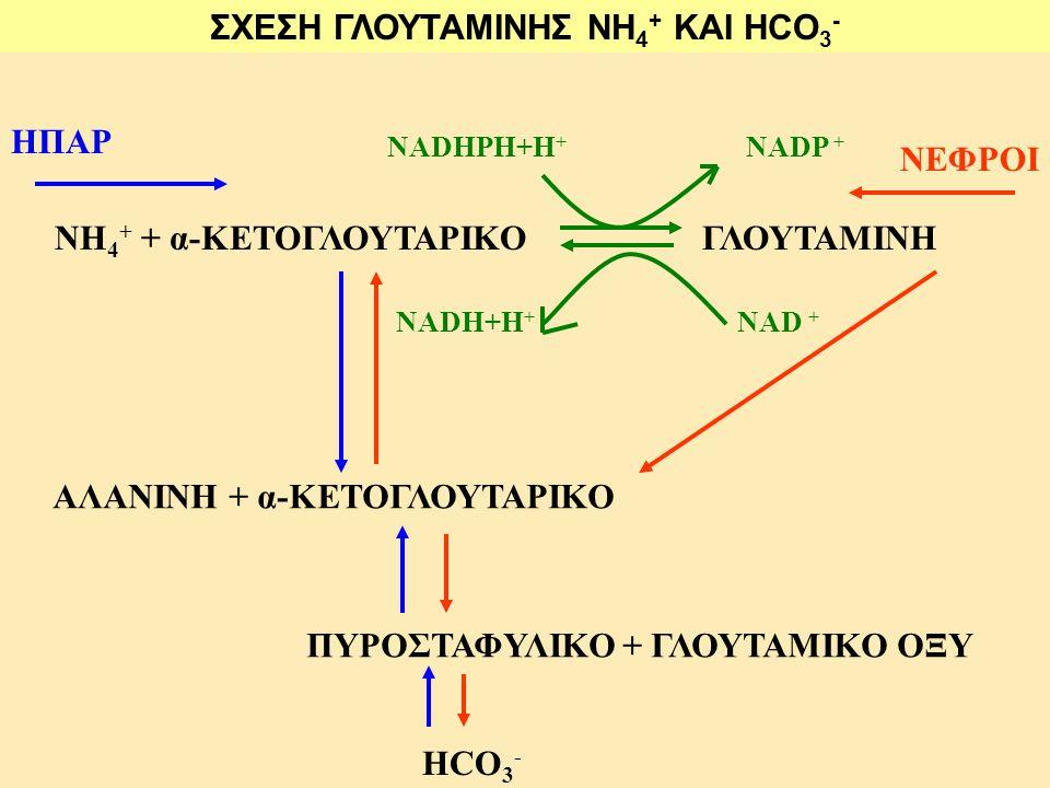 ΣΧΕΣΗ ΓΛΟΥΤΑΜΙΝΗΣ NH4+ ΚΑΙ HCO3-