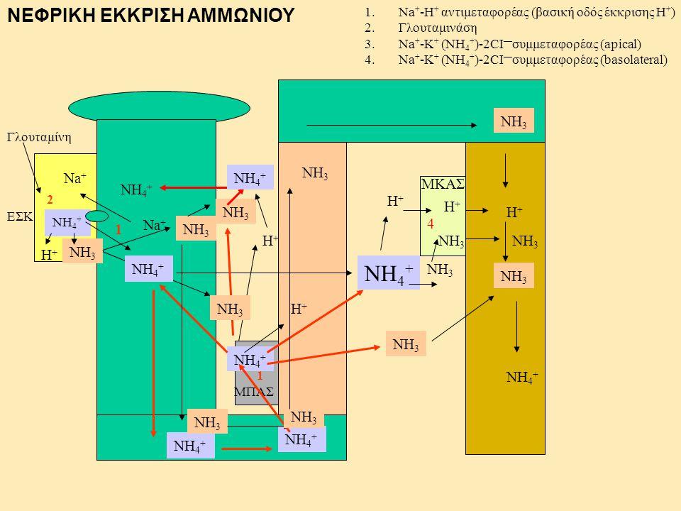 NH4+ ΝΕΦΡΙΚΗ ΕΚΚΡΙΣΗ ΑΜΜΩΝΙΟΥ NH3 NH3 Na+ NH4+ ΜΚΑΣ NH4+ H+ H+ NH3 H+