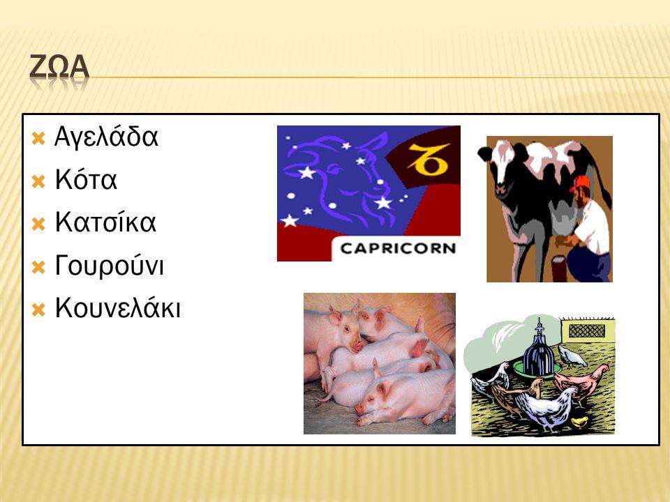 ΖΩΑ Αγελάδα Κότα Κατσίκα Γουρούνι Κουνελάκι