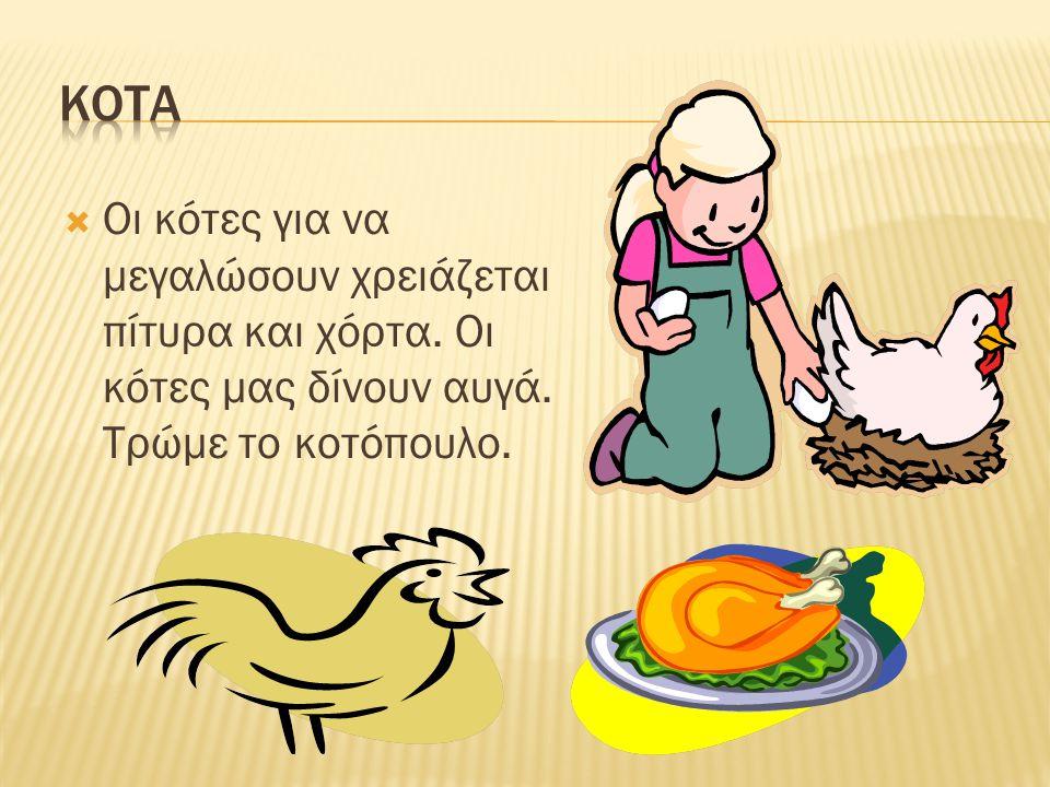 ΚΟΤΑ Οι κότες για να μεγαλώσουν χρειάζεται πίτυρα και χόρτα.