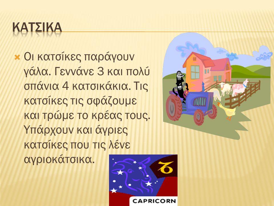 ΚΑΤΣΙΚΑ