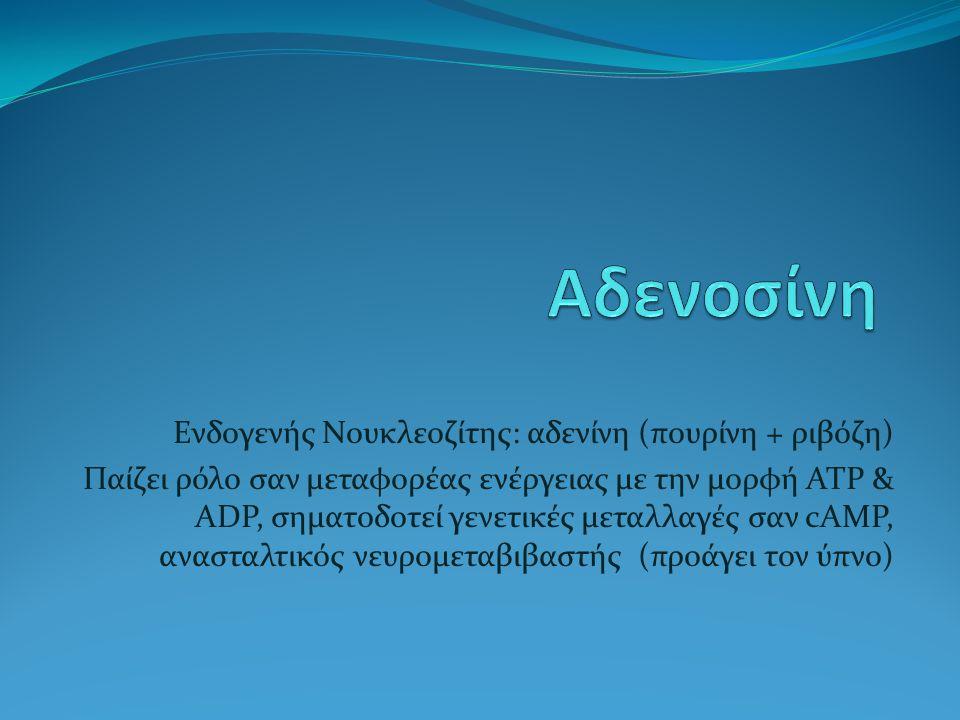 Αδενοσίνη Ενδογενής Νουκλεοζίτης: αδενίνη (πουρίνη + ριβόζη)
