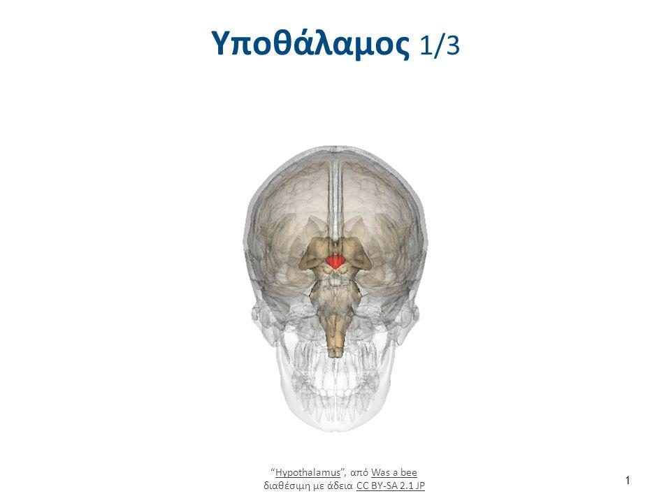 Υποθάλαμος 2/3 1806 The Hypothalamus-Pituitary Complex , από CFCF διαθέσιμο με άδεια CC BY 3.0