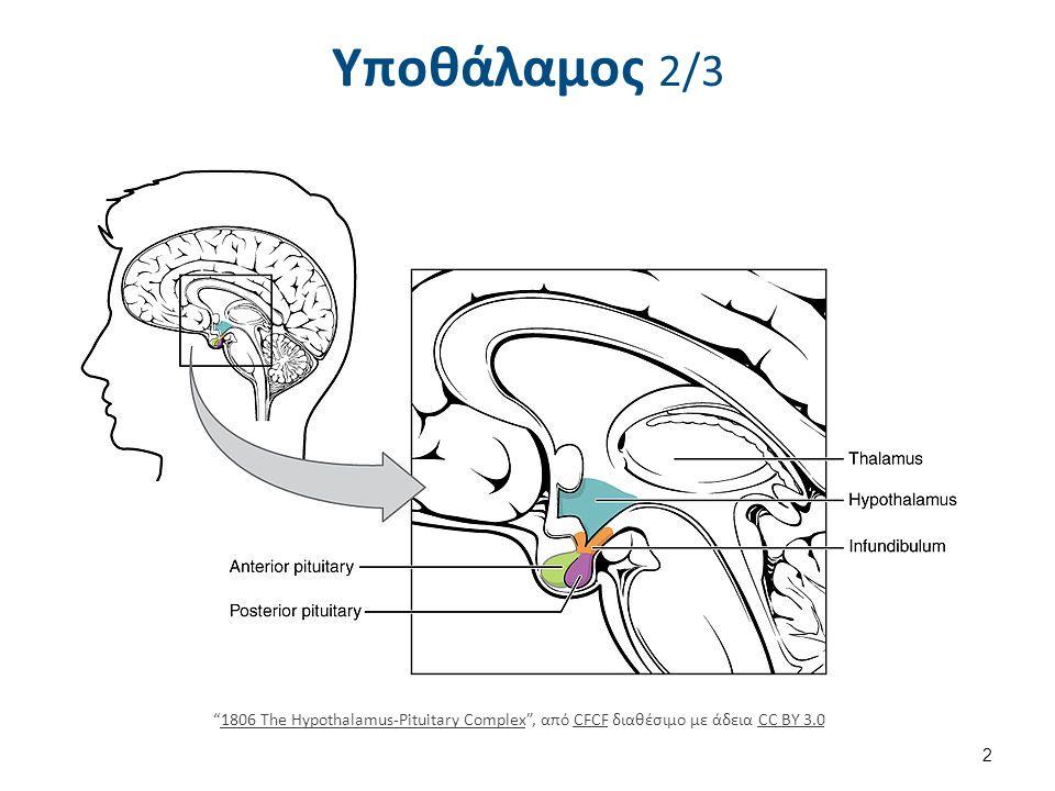 HypothalamicNuclei , από Arcadian διαθέσιμο ως κοινό κτήμα