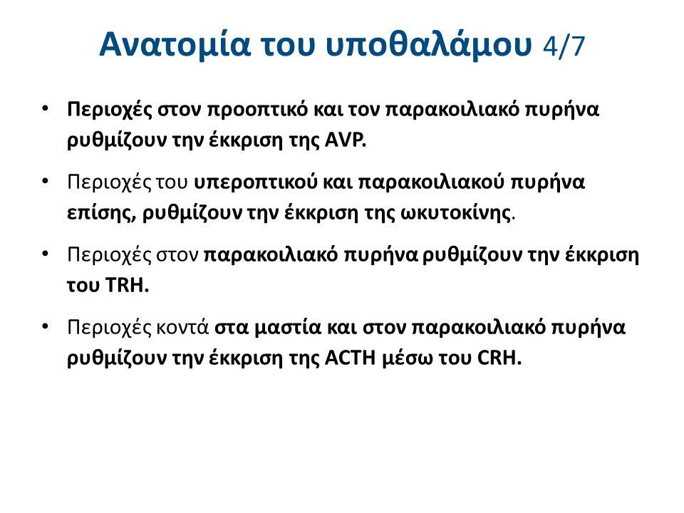 Ανατομία του υποθαλάμου 5/7