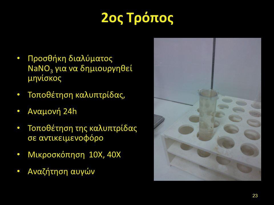 Αυγά τοξοκάρας Ανώριμα Μολυσματικά αυγά με προνύμφη
