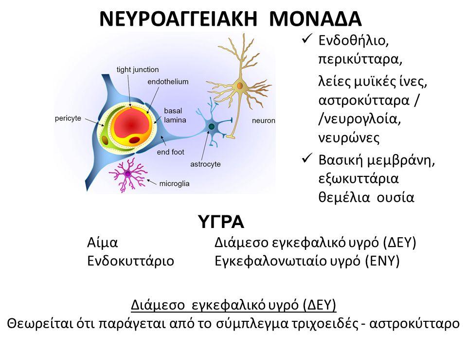 ΝΕΥΡΟΑΓΓΕΙΑΚΗ ΜΟΝΑΔΑ ΥΓΡΑ Ενδοθήλιο, περικύτταρα,
