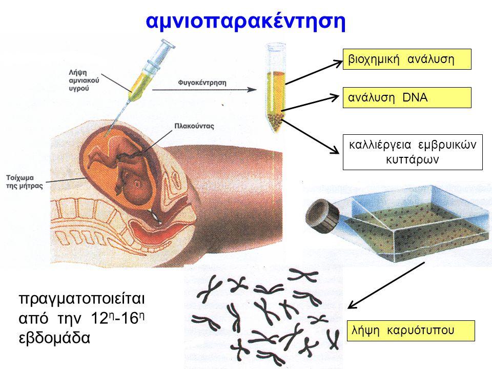 καλλιέργεια εμβρυικών κυττάρων