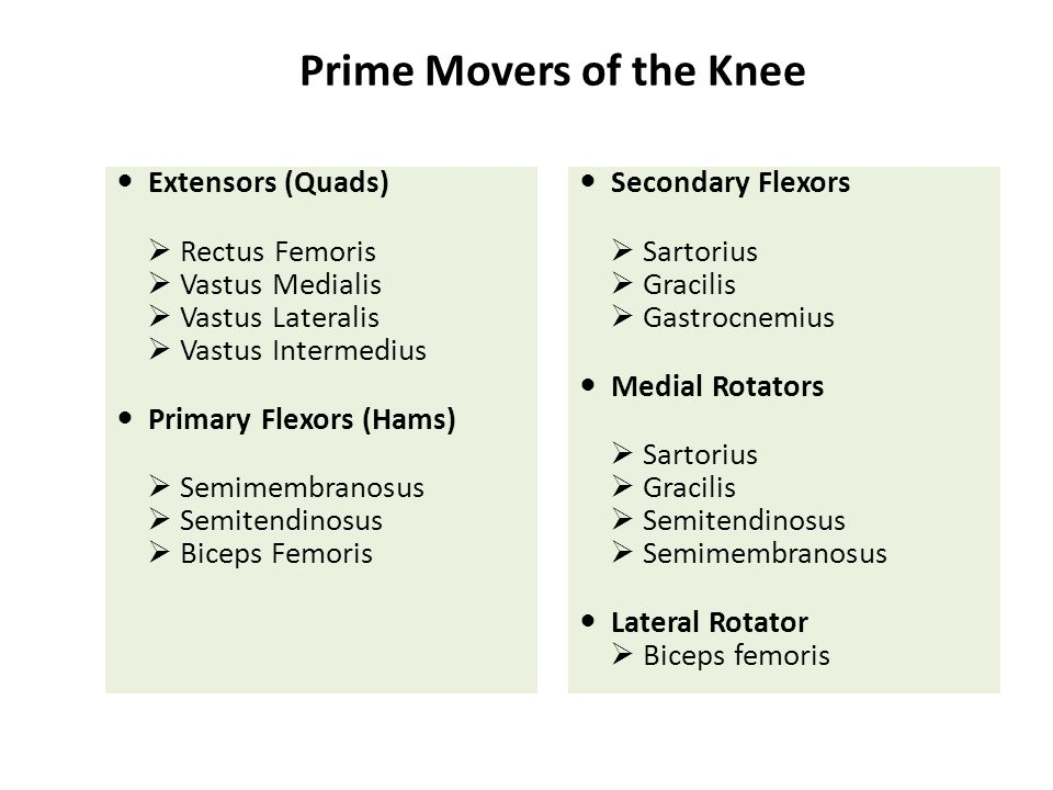 Prime Movers of the Knee