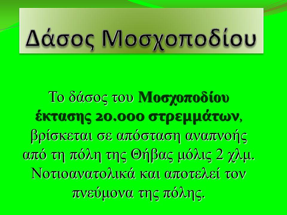 Δάσος Μοσχοποδίου