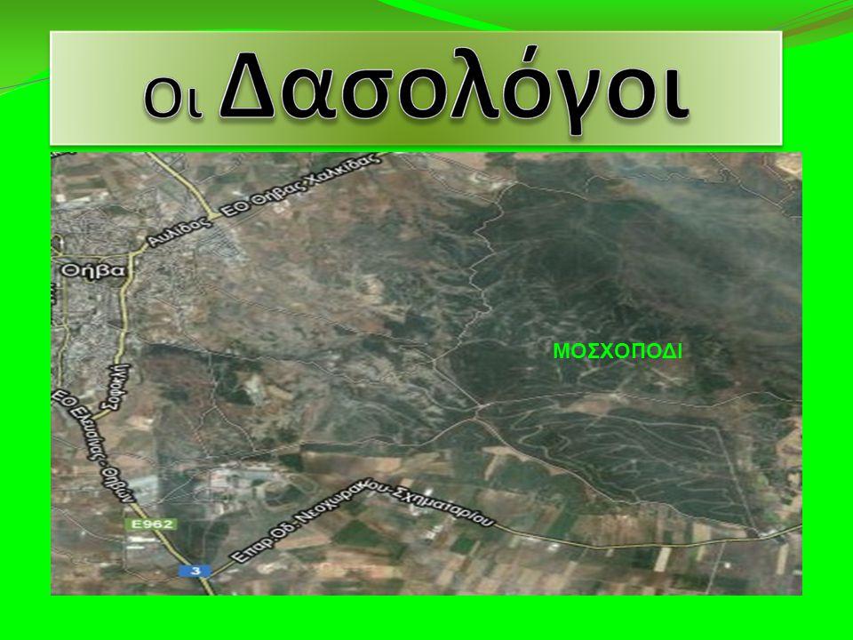 ΜΟΣΧΟΠΟΔΙ