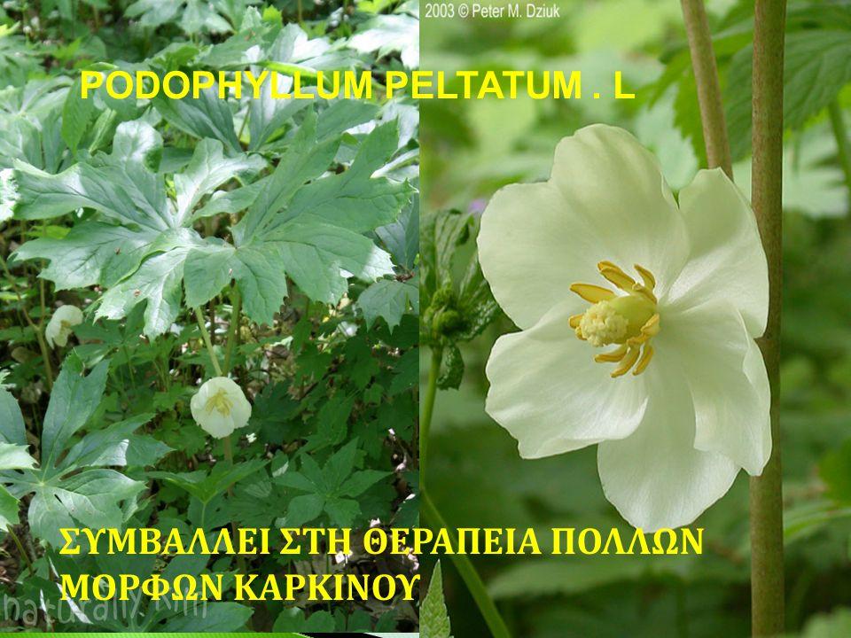 PODOPHYLLUM PELTATUM . L