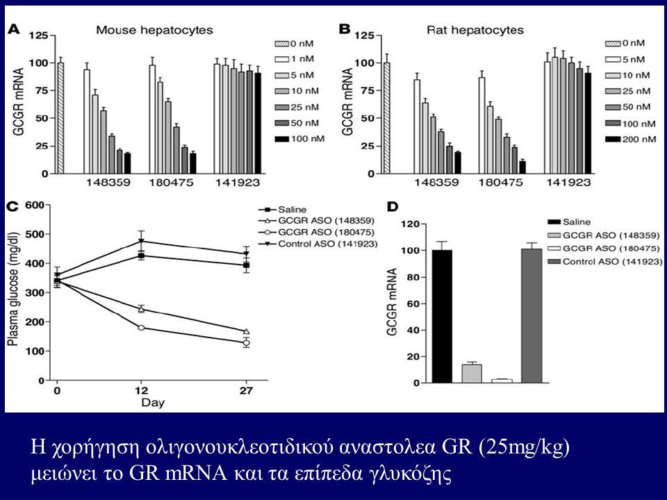 Η χορήγηση ολιγονουκλεοτιδικού αναστολεα GR (25mg/kg) μειώνει το GR mRNA και τα επίπεδα γλυκόζης