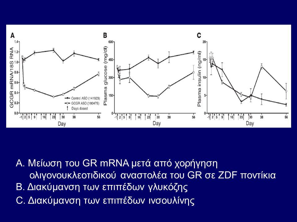 Α. Mείωση του GR mRNA μετά από χορήγηση