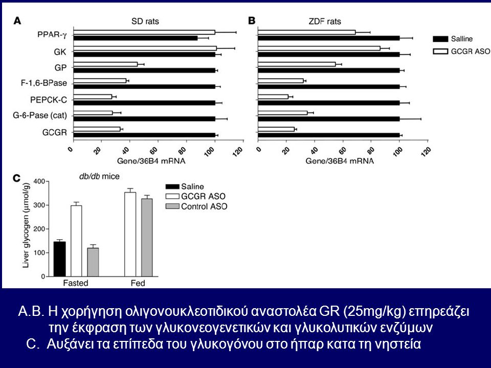A.B. H χορήγηση ολιγονουκλεοτιδικού αναστολέα GR (25mg/kg) επηρεάζει